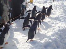 Pingvin går i vinter arkivbild