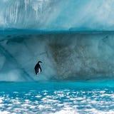 Pingvin i Antarktis royaltyfri fotografi