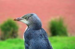Pingvin i profil Royaltyfria Bilder