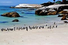 Pingvin nära Simons stad Arkivfoton