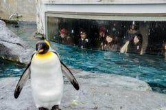 Pingvin på den Asahiyama zoo Arkivbilder