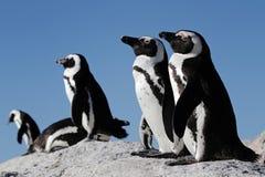 Pingvin på en vagga royaltyfria bilder