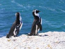 Pingvin på stenblock Royaltyfria Foton