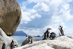 Pingvin på stenblock Arkivbilder