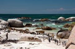 Pingvin på stenblockstranden royaltyfria foton