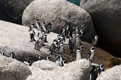 Pingvin på stenblockstranden royaltyfri fotografi