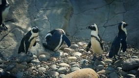 Pingvin på zoo