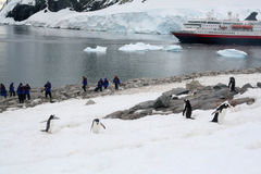 pingvin som fotograferar turister Fotografering för Bildbyråer