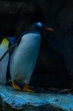 Pingvinanseende Royaltyfri Fotografi