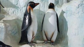 Pingvinbakgrund Royaltyfri Fotografi