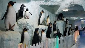 Pingvinbakgrund Royaltyfria Foton