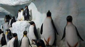 Pingvinbakgrund Arkivfoto