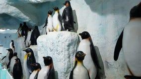 Pingvinbakgrund Arkivfoton