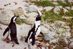 Pingvinet äter fisken royaltyfri foto
