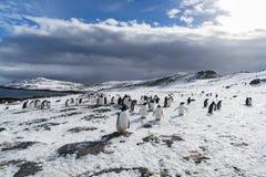 Pingvinfamiljen i solen royaltyfri bild