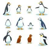 Pingvintecken i olikt poserar vektoruppsättningen royaltyfri illustrationer