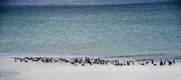 PINGWIN kolonia NA plaży Obrazy Royalty Free