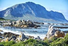 Pingwin kolonia w kamienistym punktu rezerwacie przyrody betty&-x27; s zatoka Boland obrazy royalty free