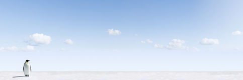 pingwin krajobrazowe zima Fotografia Stock