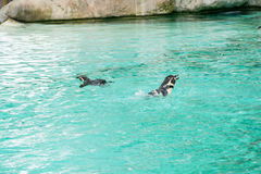 Pingwin od Antartic Fotografia Stock