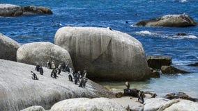 Pingwin plaża, Południowa Afryka Obrazy Stock