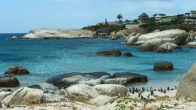 Pingwin plaża, Południowa Afryka Zdjęcie Royalty Free