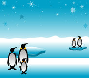 pingwin rodziny Zdjęcie Royalty Free
