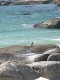 pingwin samotny Zdjęcia Royalty Free