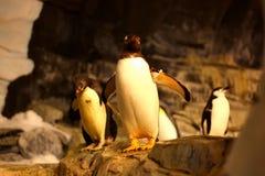 Pingwin w dennym świacie fotografia royalty free