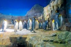 Pingwin w Osaka akwarium Kaiyukan Osaka akwarium Kaiyukan jest jeden wielcy jawni akwaria w świacie loctaed obrazy stock