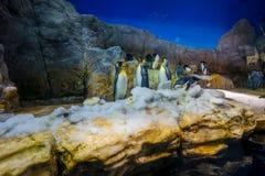 Pingwin w Osaka akwarium Kaiyukan Osaka akwarium Kaiyukan jest jeden wielcy jawni akwaria w świacie loctaed obraz royalty free