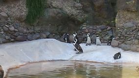 Pingwinu gang Obrazy Royalty Free