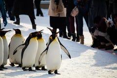 Pingwinu marsz przy Asahiyama zoo, hokkaido Obrazy Royalty Free