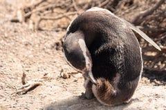 Pingwinu okrąg Zdjęcie Royalty Free