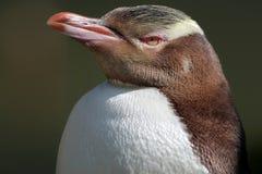 pingwinu przyglądający się kolor żółty Obrazy Stock