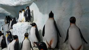 Pingwinu tło Zdjęcie Stock