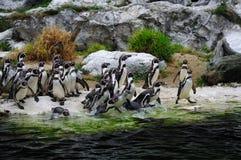 pingwinu zoo obrazy royalty free