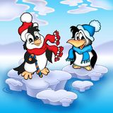 pingwiny. Fotografia Stock