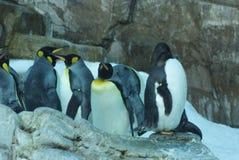 pingwiny Obraz Stock