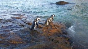 pingwiny obraz royalty free