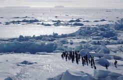 pingwiny antarctic Zdjęcia Royalty Free