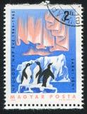 Pingwiny i biegunowy światło obrazy stock