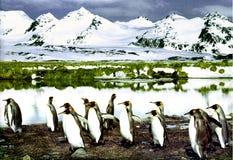 pingwiny króla Obraz Royalty Free