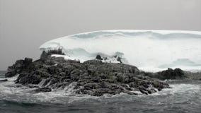 Pingwiny na śnieżnej skalistej brzegowej górze lodowa i lodowym floe w oceanie Antarctica zbiory wideo