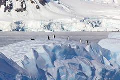 Pingwiny na górze lodowa, Antarctica Fotografia Stock