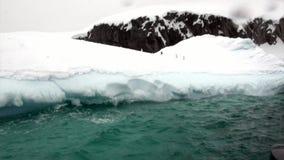 Pingwiny na górze lodowa i lodowym floe w oceanie Antarctica zbiory wideo