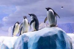 Pingwiny na lodzie w akwarium Obraz Royalty Free