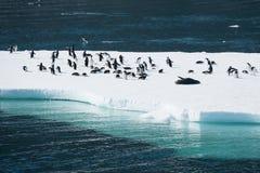 Pingwiny na śniegu Obrazy Royalty Free