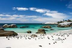 Pingwiny na plaży Zdjęcia Stock