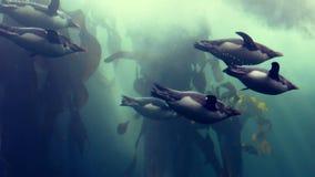 Pingwiny pływa w rybim zbiorniku przy aqurium zbiory